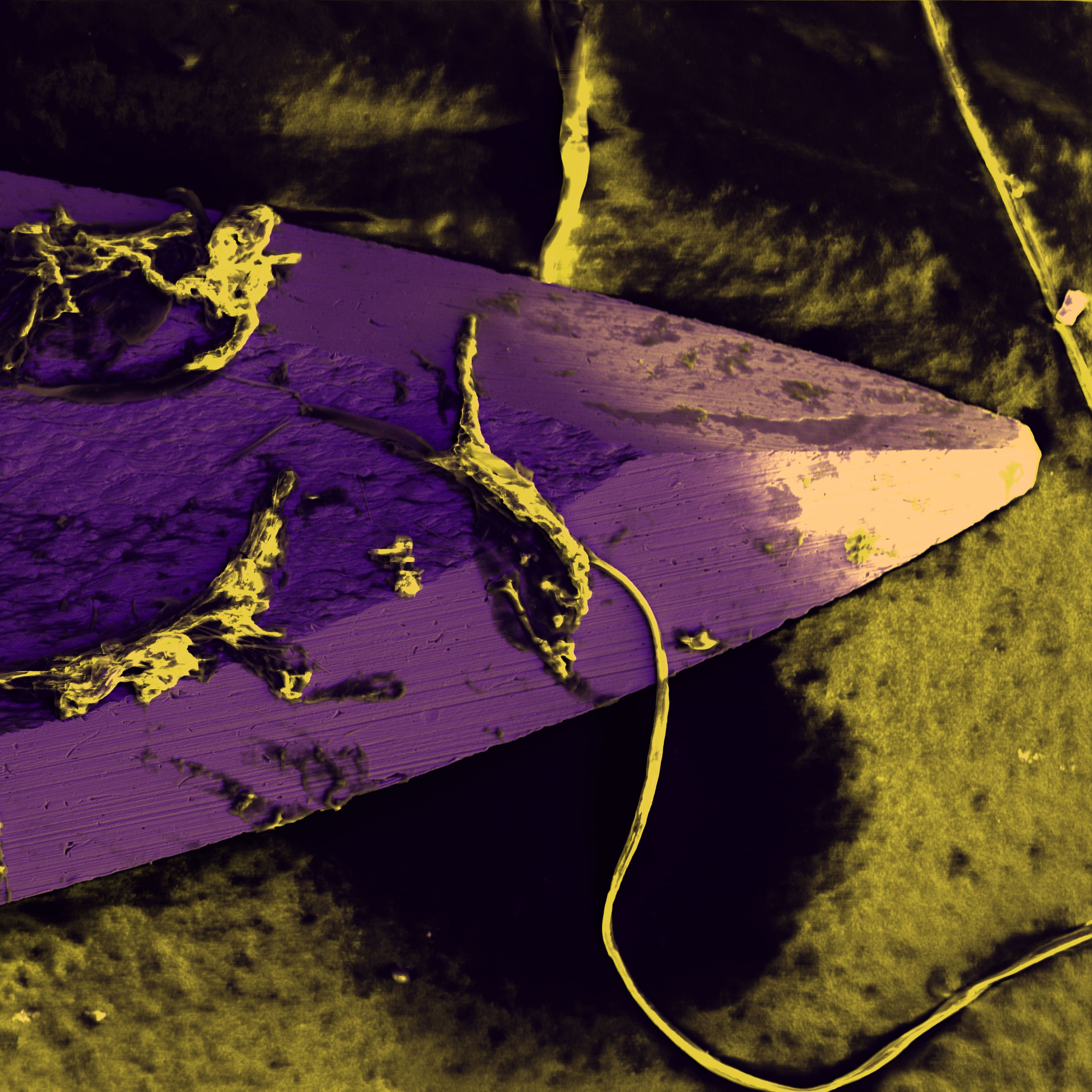 false colour SEM images DISS5